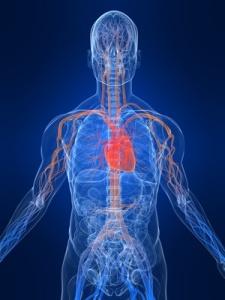 hjerte og karsystemet